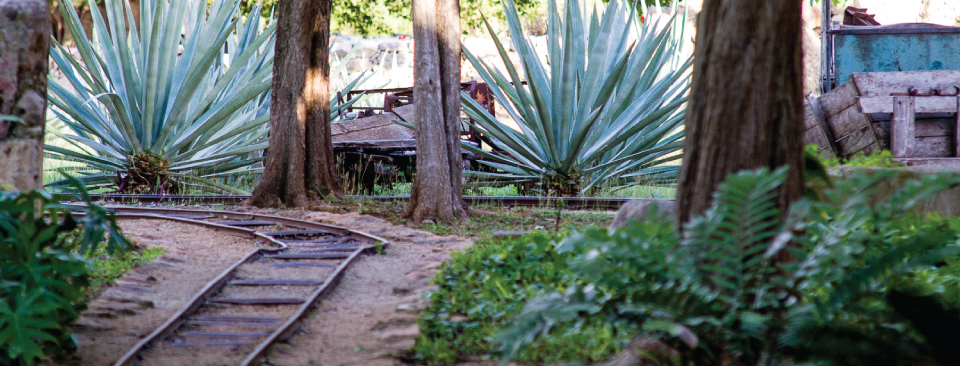 Step back in time inside colonial era haciendas and learn about the history of henequen cultivation.